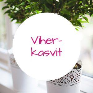 Jennin Kukkapuoti - iloisen palvelun kukkakauppa Tampereella - pienet viherkasvit